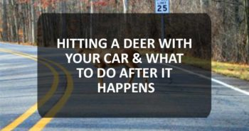 Hitting A Deer With Your Car & What To Do After It Happens